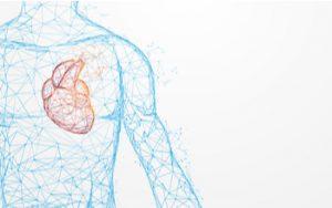 Dibujo del cuerpo humano con énfasis en el corazón