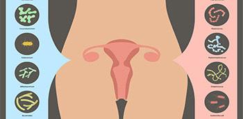 Dibujo explicativo del funcionamieto de los probióticos y la salud vaginal